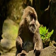 自然生态猴区