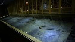 兴伟古生物化石博物馆