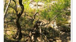九峰山自然保护区