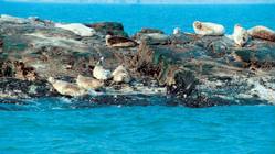 钓鱼岛海豹礁