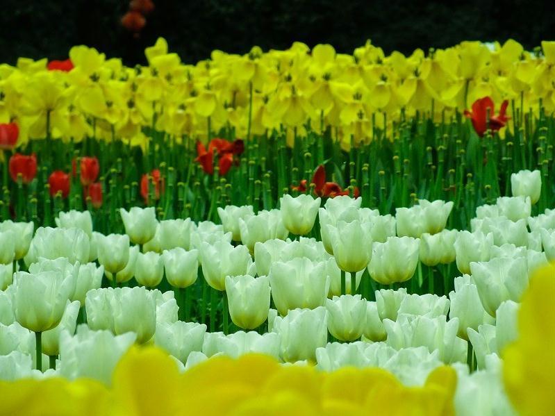 重庆花卉园