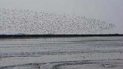 鸭绿江口湿地观鸟园