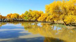 胡杨林国家级自然保护区(胡杨林国家森林公园)