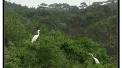 白鹭公园(BailuPark)
