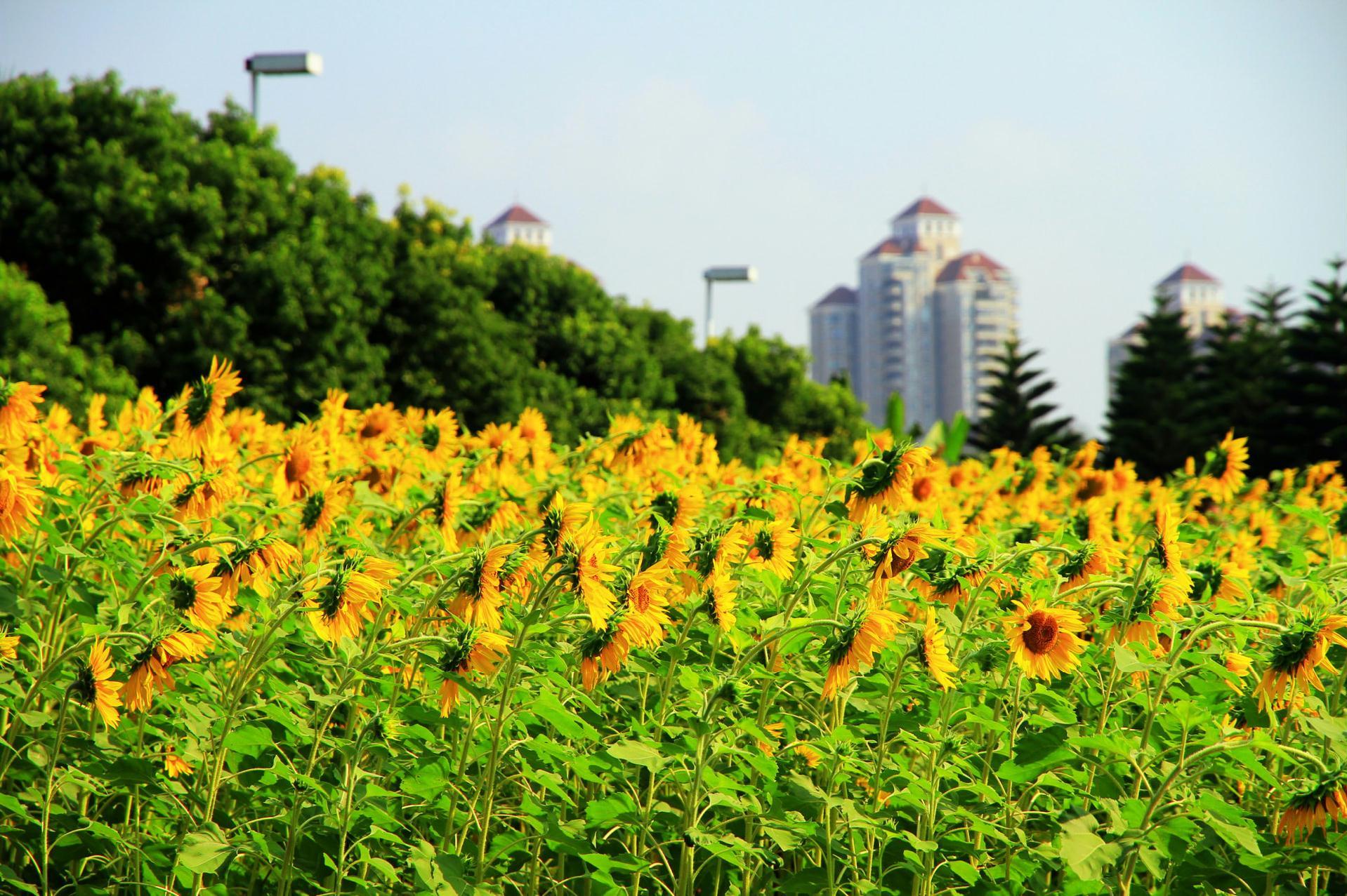 南江滨堤外公园