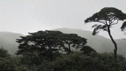 猫儿山森林公园