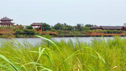 哈尔滨金河湾湿地植物园