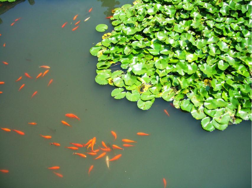 【最美春天】游走在杭州的春天里