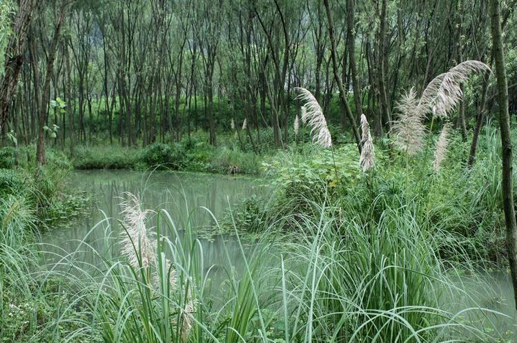 江洋畈生态公园