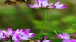 佛坪国家级自然保护区