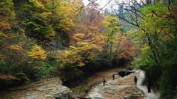 黎坪国家级森林公园