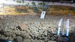 恐龙化石展馆