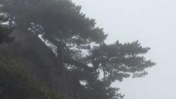 摄影杂谈——黄山雾凇(一)