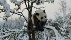 大熊猫生态乐园