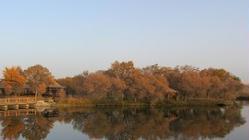 喀什地区泽普县金湖杨国家森林公园