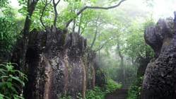 美女峰森林公园