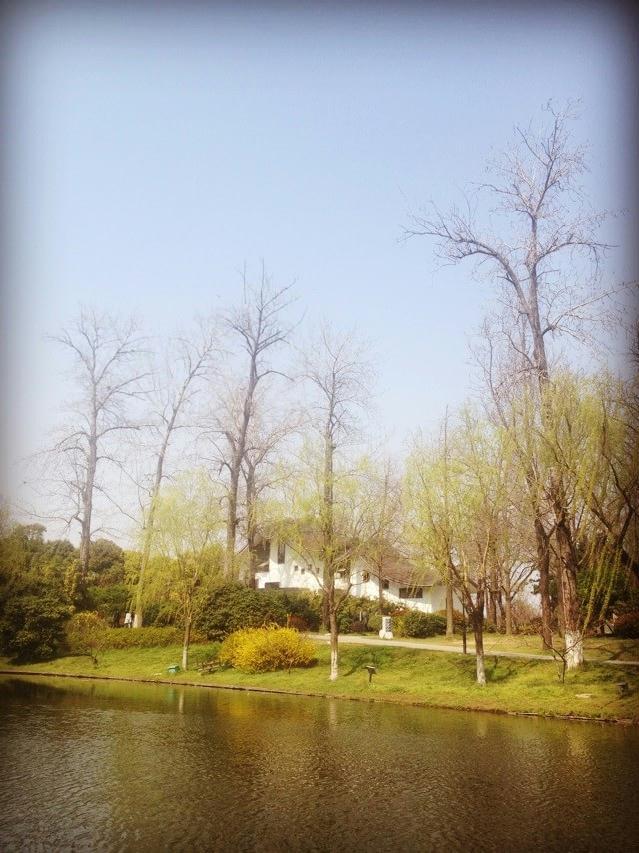 南京《艺莲园》荷韵流芳
