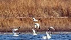 双台河口自然保护区