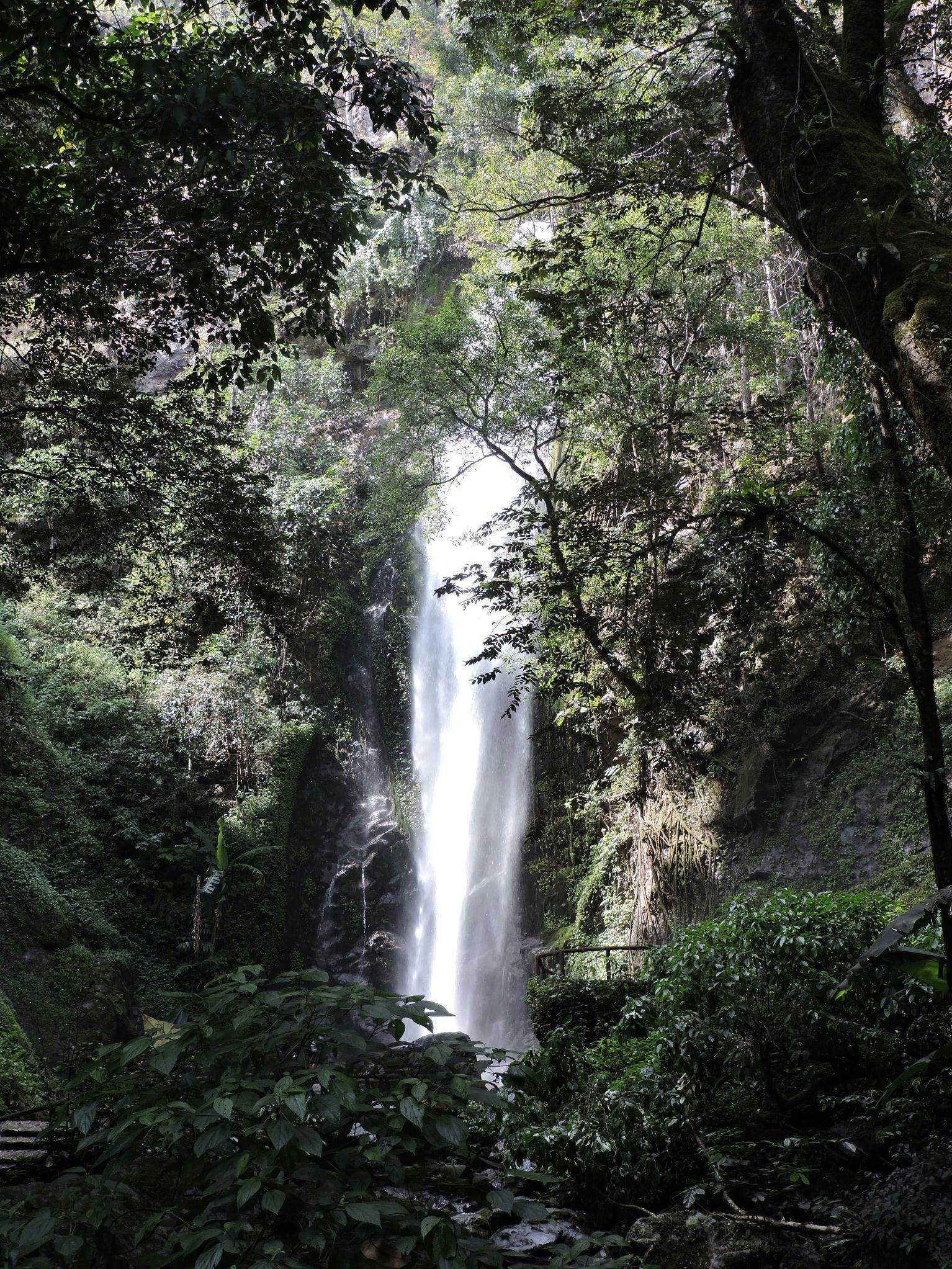 莫里热带雨林风景区