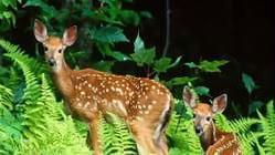 铁布自然保护区