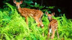 铁布梅花鹿自然保护区