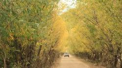 贡德林草原
