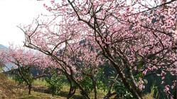 汕头天坛花园——原创作品