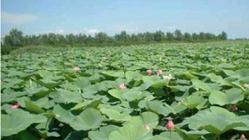 新民小西湖