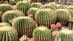 沙漠植物区