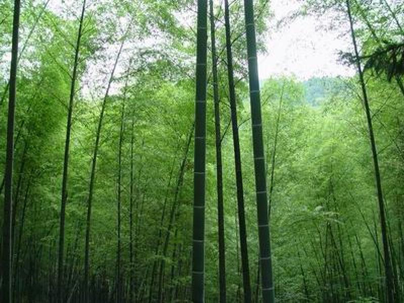 昆山森林公园