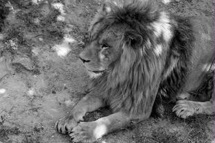 神雕山野生动物保护区