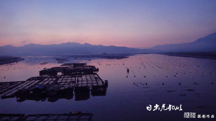 霞浦海带收获季