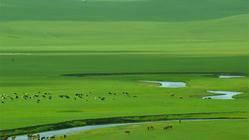 锡林郭勒大草原