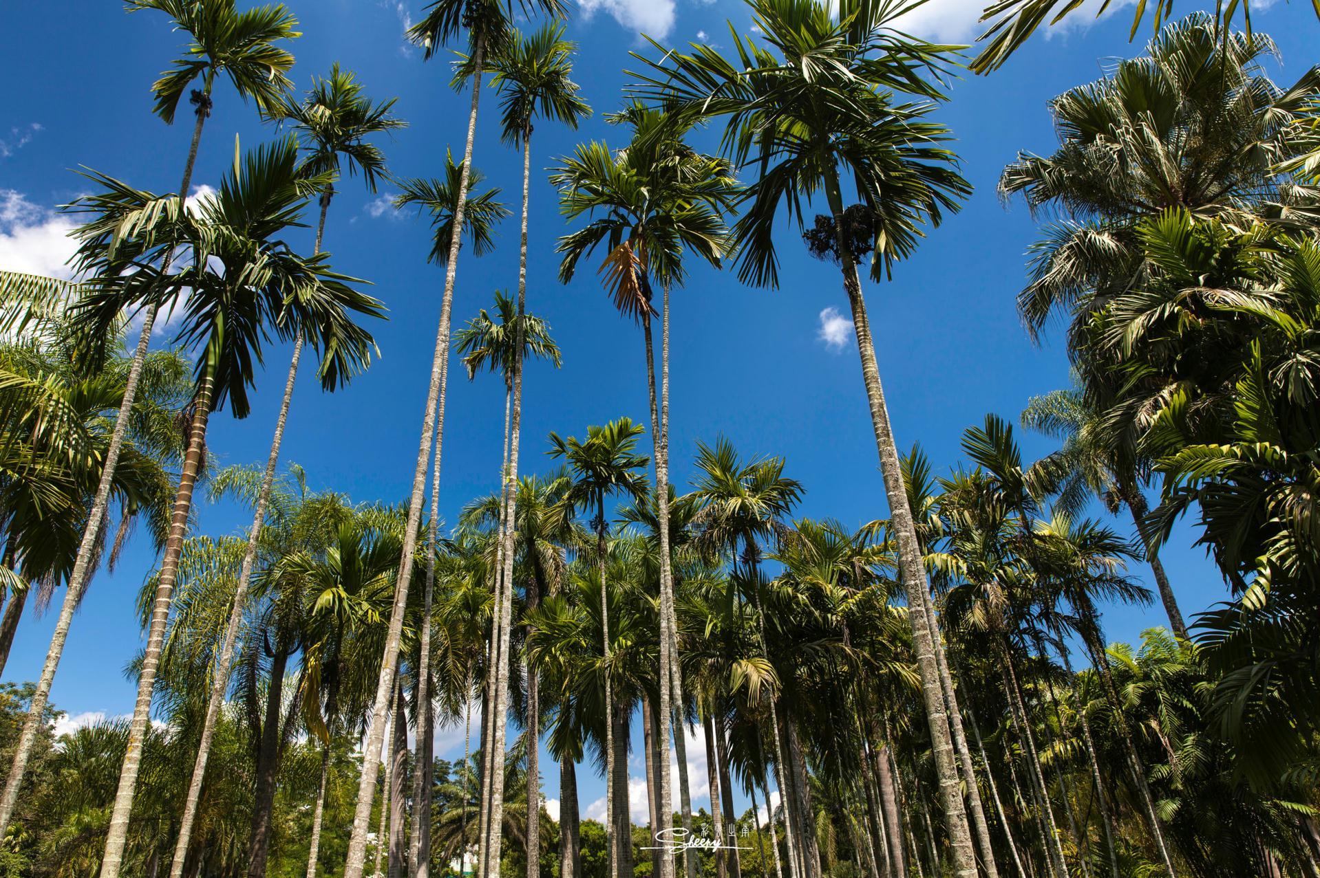 勐仑热带植物园
