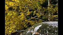 花岗岩石林国家地质公园