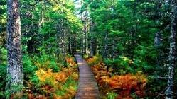 丰林世界生态圈保护区