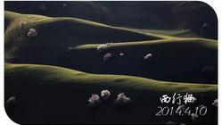 2014年新疆伊犁拍摄草原鲜花