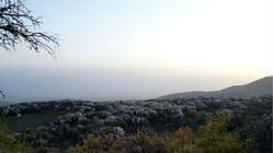 野果林风景区