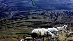 南泥河空中草原