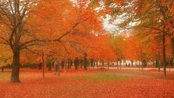 湛江红树林国家级自然保护区(ZhanjiangMangroveNationalNatureReserve)