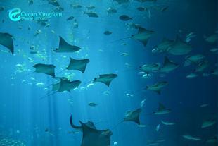 珠海长隆海洋王国