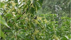 淇澳岛红树林