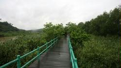 珠海淇澳红树林湿地生态园